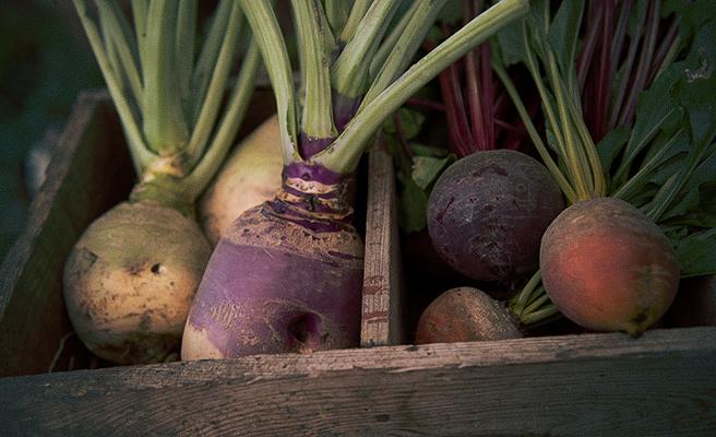 Skördade grönsaker