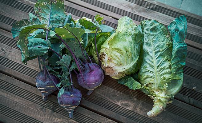 Det finnes masse god mat å dyrke.