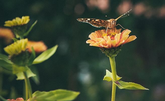 Her foregår det pollinering.
