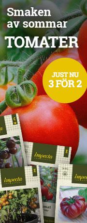 Tomater - smaken av sommar