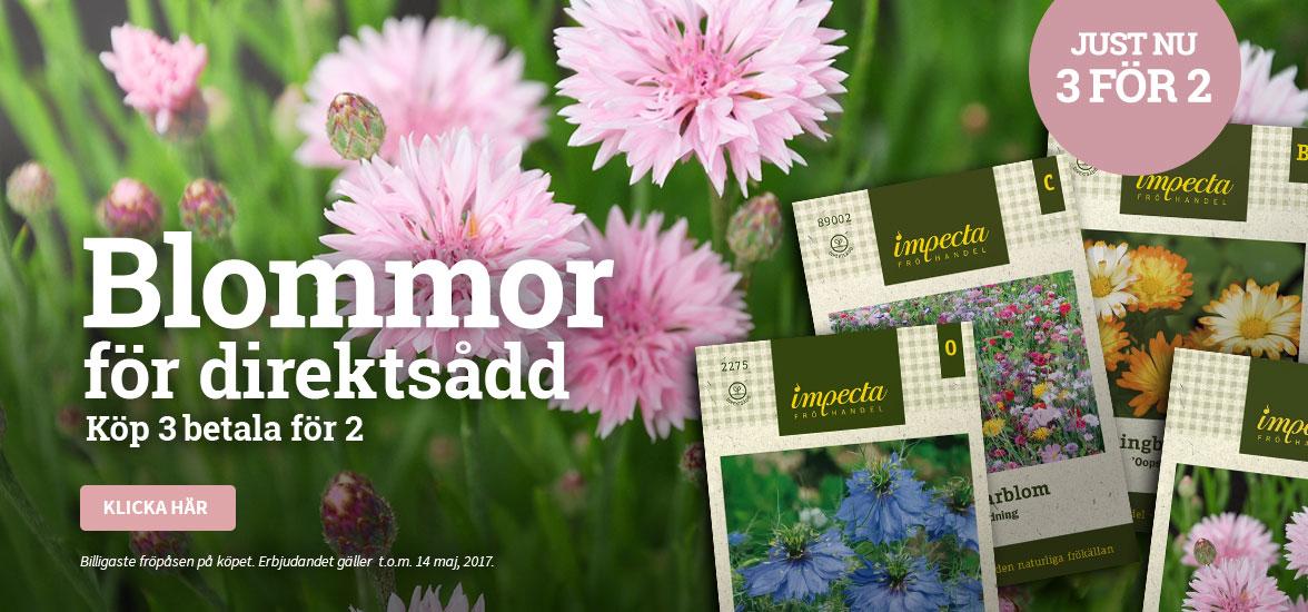 Blommor för direktsådd - Köp 3 betala för 2