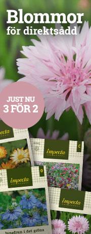 Blommor för direktsådd - 3 för 2