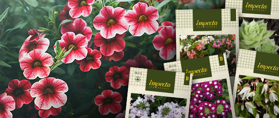 Blommor för tidig sådd