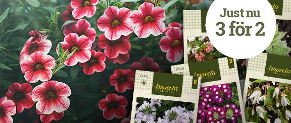 Blommor för tidig sådd - Köp 3 betala för 2