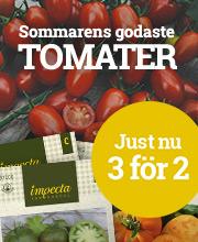 Sommarens godaste tomater