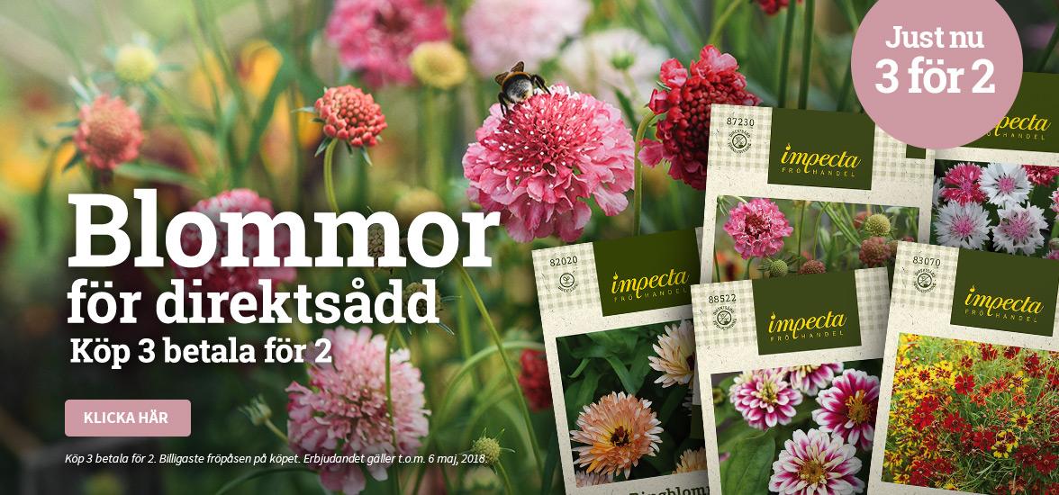 Blommor för direktsådd