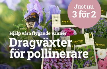 Dragväxter för pollinerare - Köp 3 betala för 2