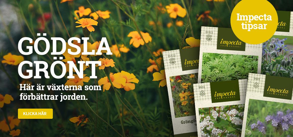 Gödsla grönt - Här är växterna som förbättrar jorden