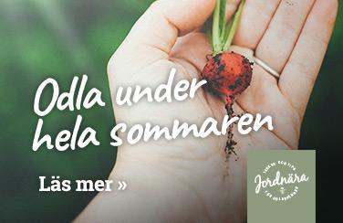 Odla under hela sommaren - artikel på Jordnära