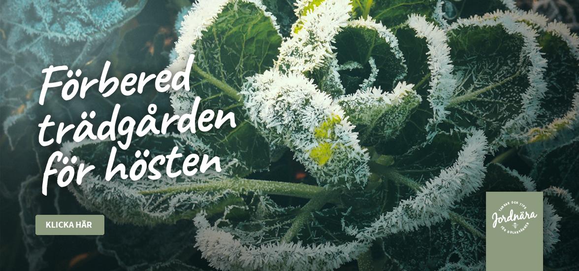 Odlarkunskap: Förbered trädgården inför hösten
