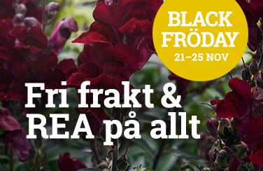 Black Fröday - rea och fri frakt på hela sortimentet