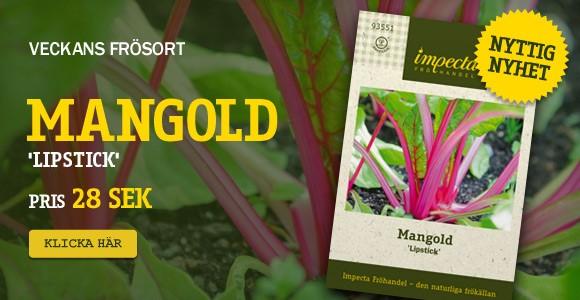 Veckans frösort - Mangold 'Lipstick'