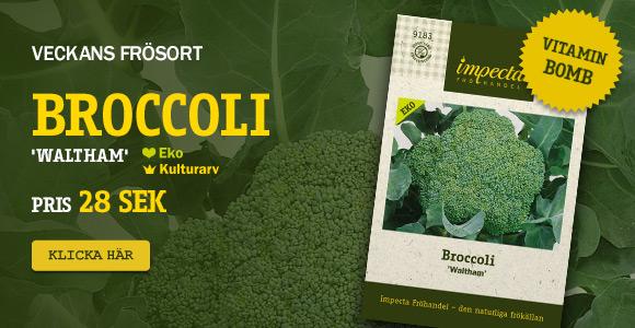 Veckans frösort - Broccoli