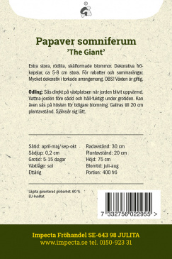 Enkel Vallmo 'The Giant'