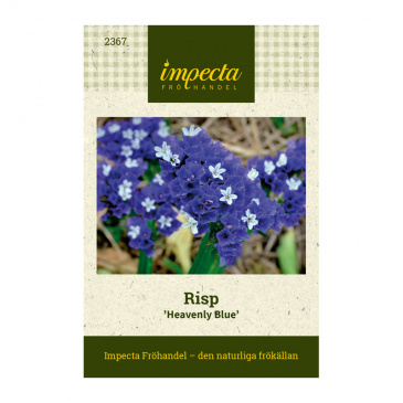Risp 'Heavenly Blue'