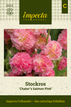 Stockros 'Chaters Salmon Pink' Fröpåse Impecta