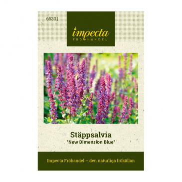 Stäppsalvia 'New Dimension Blue'