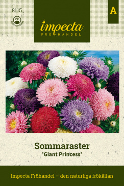 Sommaraster 'Giant Princess'