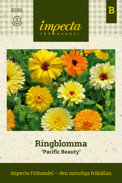 Ringblomma 'Pacific Beauty'