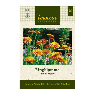 Ringblomma 'Indian Prince'