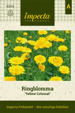 Ringblomma 'Yellow Colossal'
