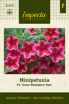 Minipetunia F1 'Crave Strawberry Star'