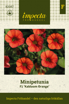 Minipetunia F1 'Kabloom Orange'