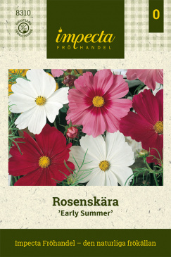 Rosenskära 'Early Summer'