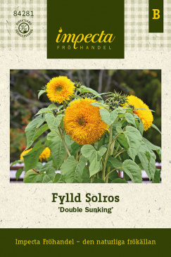 Fylld Solros 'Double Sunking'