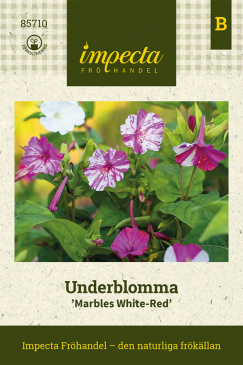 Underblomma 'Marbles White-Red'