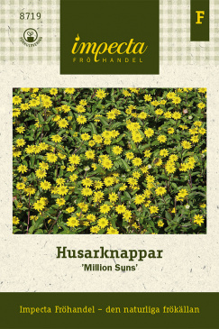 Husarknappar Million Suns, fröpåse Impecta