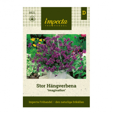 Stor Hängverbena 'Imagination'