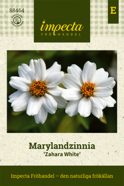 Marylandzinnia 'Zahara XL White'
