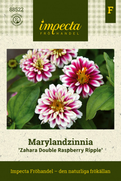 Marylandzinnia 'Zahara Double Raspberry Ripple' fröpåse Impecta