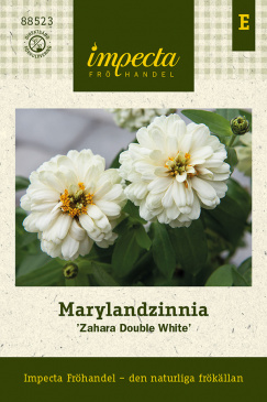 Marylandzinnia 'Zahara Double White' fröpåse Impecta