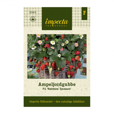Ampeljordgubbe F1 'Rainbow Treasure'