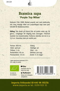 Majrova 'Purple Top Milan'