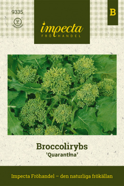 Broccolirybs 'Quarantina' Impecta fröpåse
