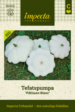 Musselsquash Custard White fröpåse Impecta